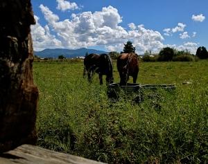 truchas horses