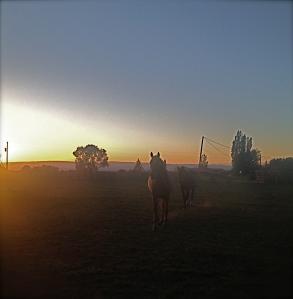 truchas dawn w horses_2_2